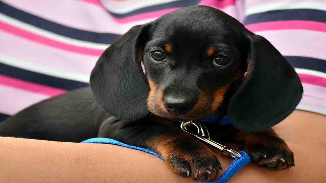 adopting a puppy is an act of love