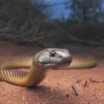 Snakes use magnetism to fight off toxins