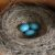 8 sided eggs have been used in bird research
