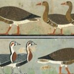 Extinct geese in an Egyptian painting