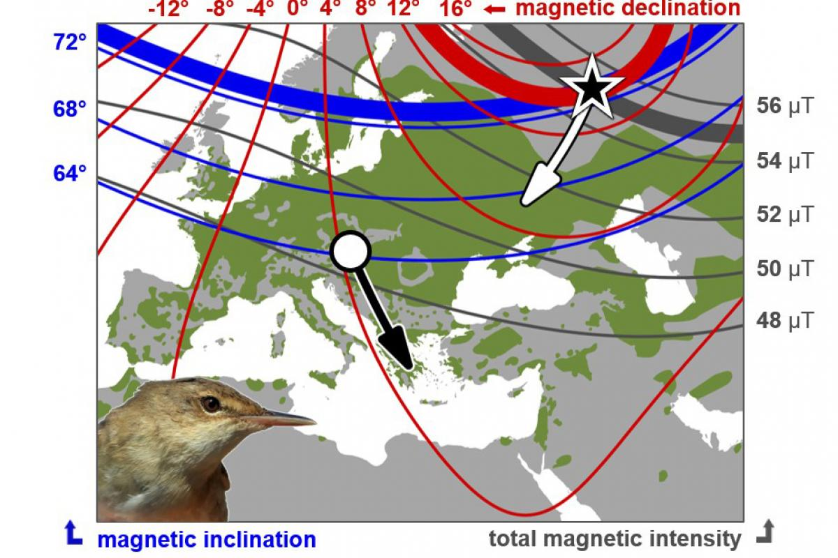 These birds can only be guided by their navigation system with no other references.