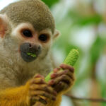 Marmoset monkeys distinguish conversations from others