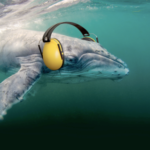 Noise pollution dominates the sea