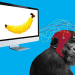 The monkey that can play video games