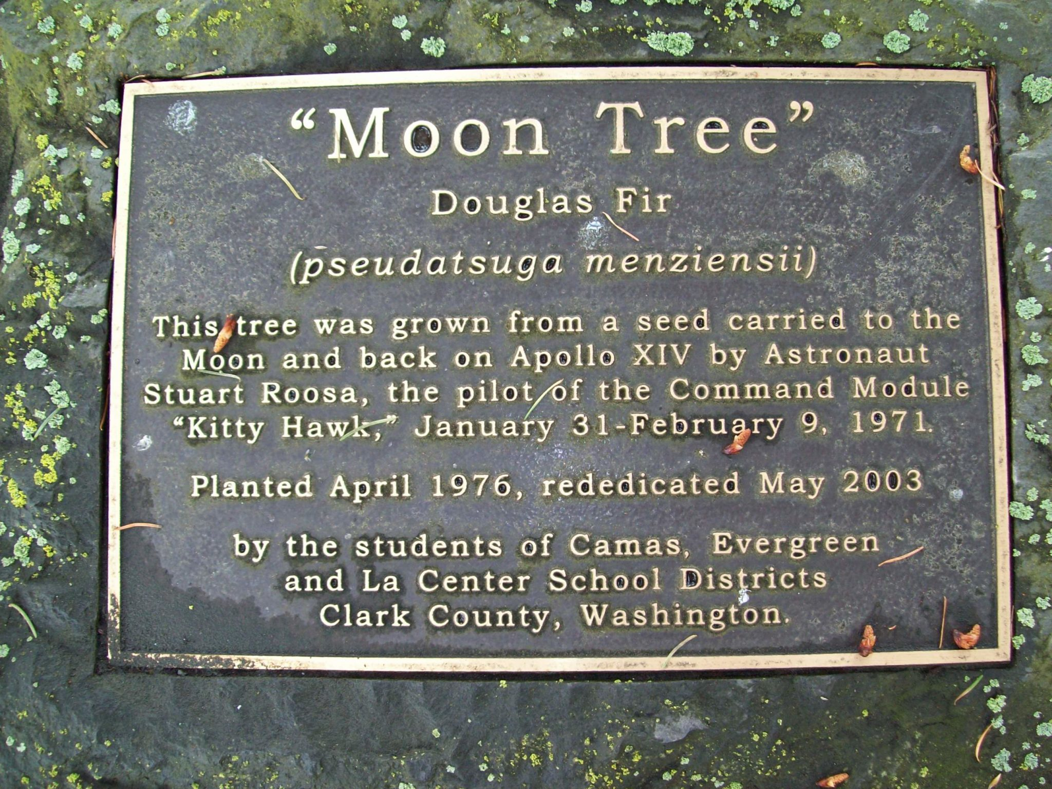 A badge usually provides information on the origin of these traveling trees.
