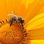 A bee sanctuary could help reverse the danger of extinction