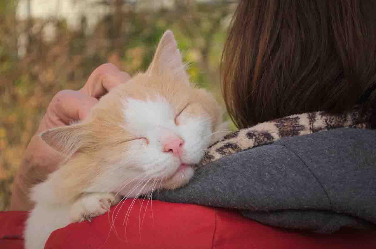 Cats like caresses