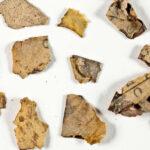 Fragments of the Dead Sea Manuscript
