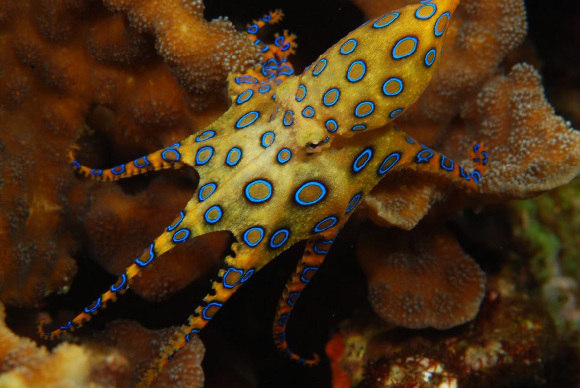 Octopuses have a great ability to camouflage and learn.