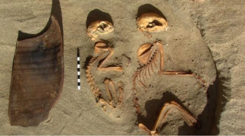 The oldest animal cemetery was found in Egypt.