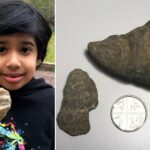 The boy who found a fossil in his garden