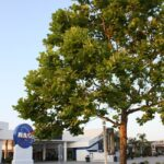 The trees that were seeds in space