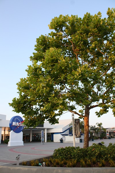 Trees that were seeds in space today grow in many places.  One of them in front of NASA.