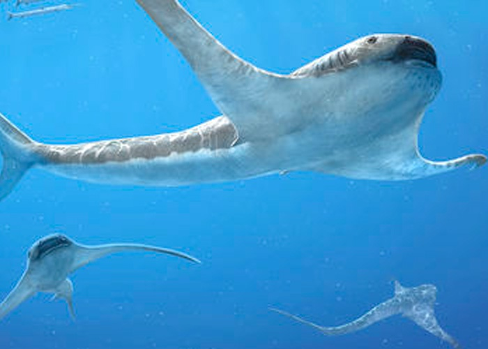 The chalk shark with wings opens a new chapter in the development of sharks.