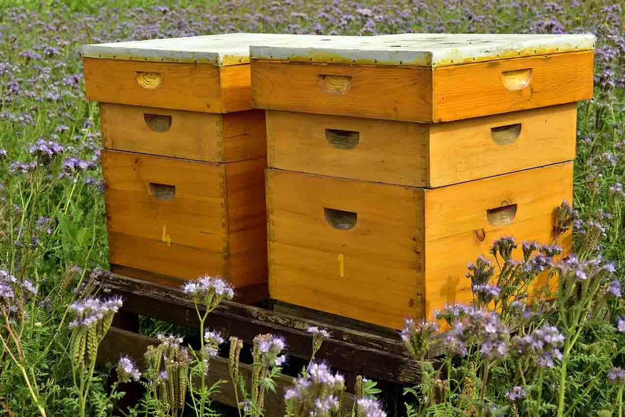 smart beehives