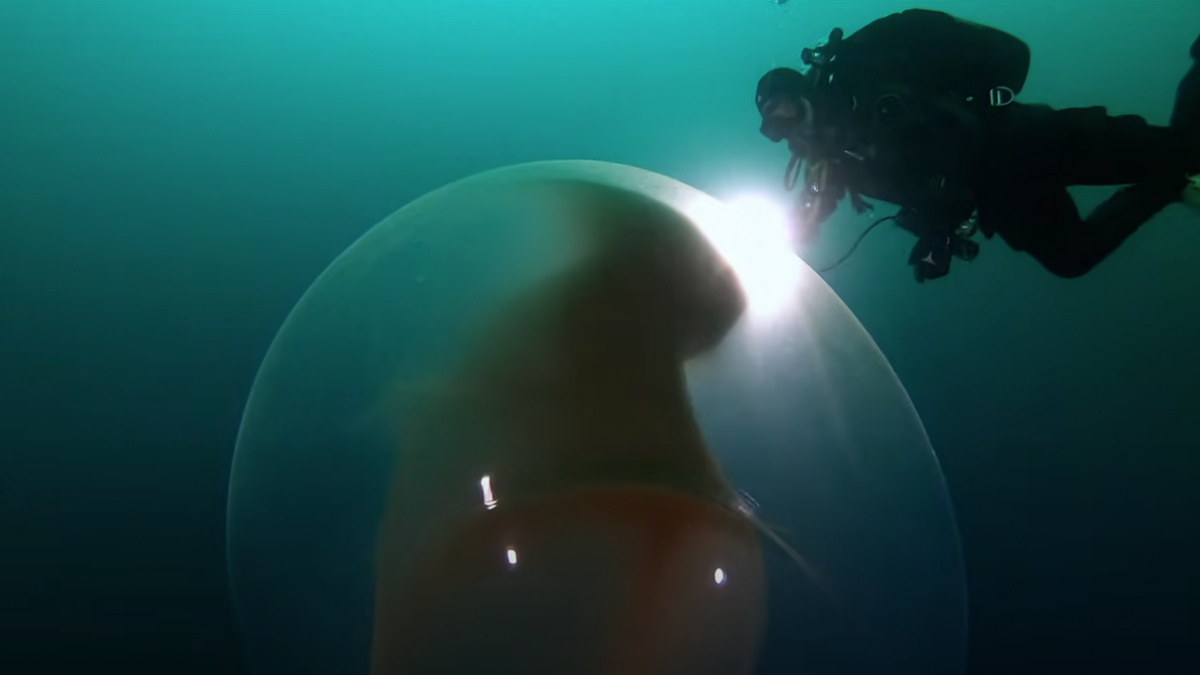 The strange balloons floating in the ocean already have an explanation.