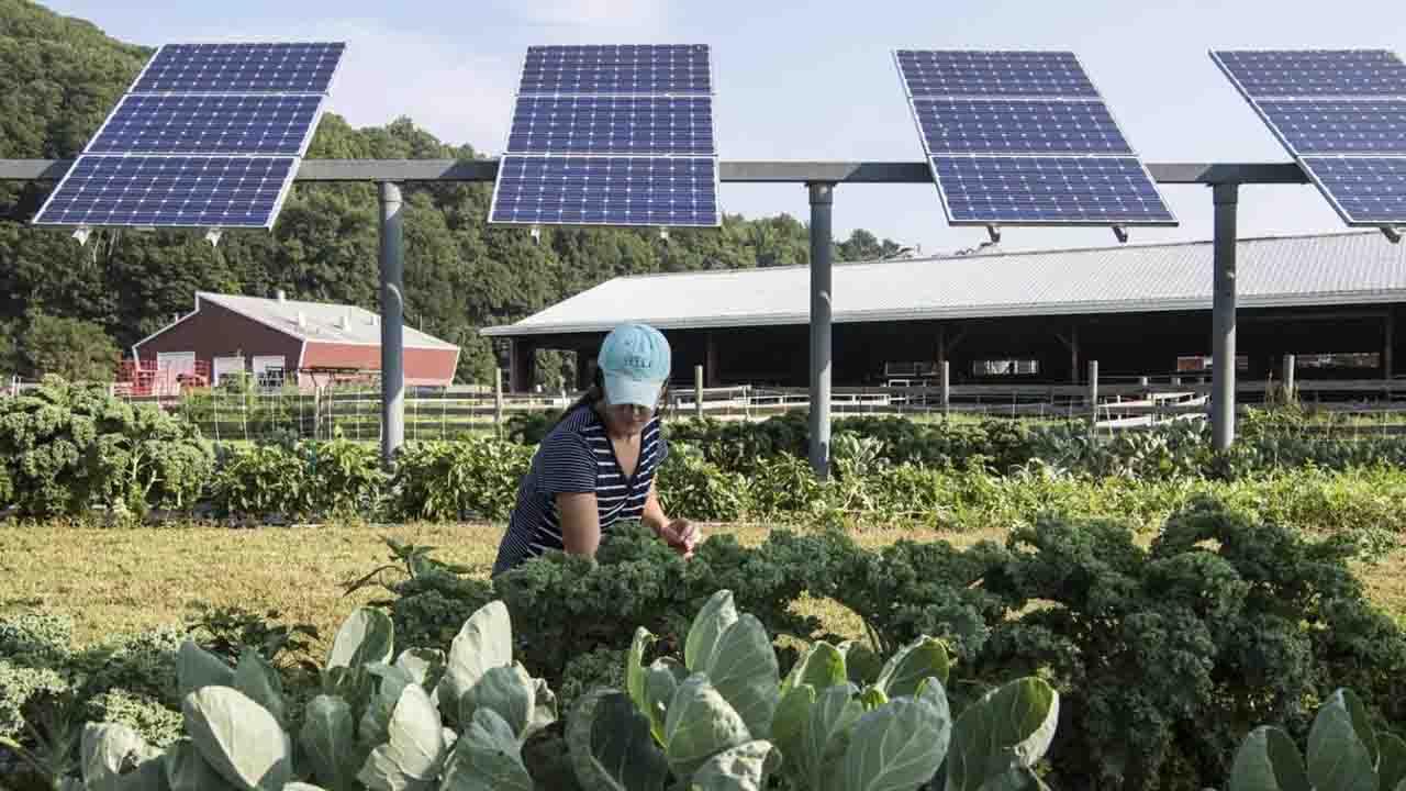 Agro-voltaic energy
