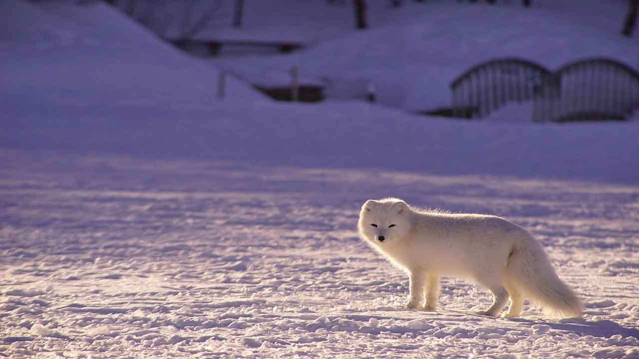 Mitigating climate change benefits the North Pole and the Arctic