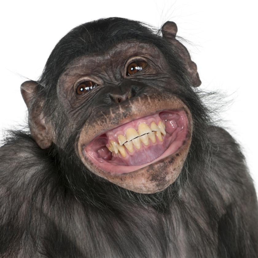 In primates, it seems easier to recognize this possible laugh by its resemblance to us.