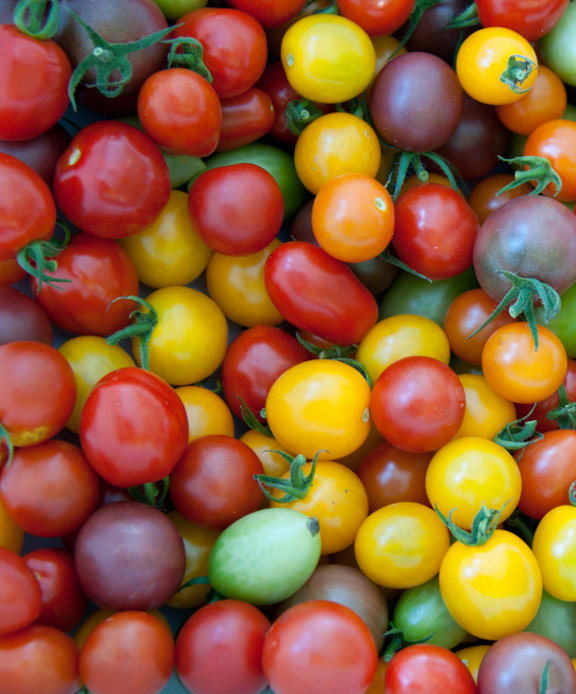 Scientists are changing the ripeness and color of tomatoes.
