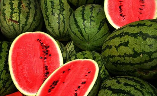How did the watermelon get sweet?  Selective seeding explains this.
