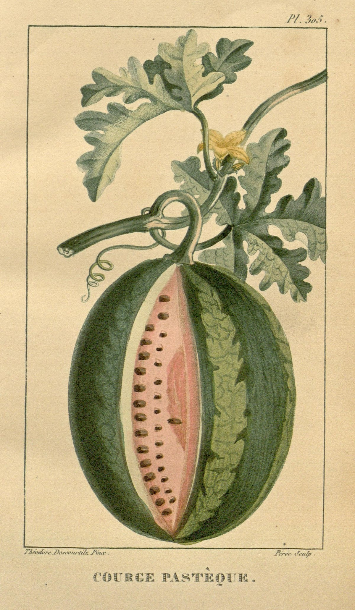 A few hundred years ago watermelons tasted very different.