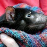 Tasmanian devils were born in Australia