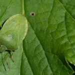 Biological pest control is valuable because it replaces pesticides