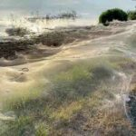 In Australia, a lake was covered with cobwebs after a storm