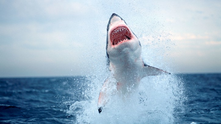 Sharks almost disappeared 19 million years ago.