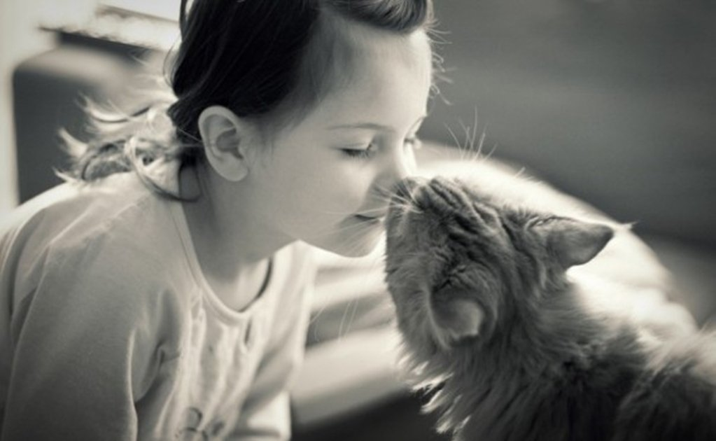 Science identifies the types of relationships between humans and cats.