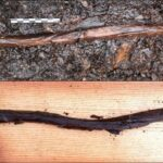 The staff of a 4,000 year old shaman