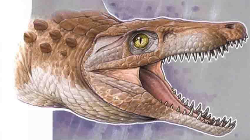 Sketch of the prehistoric reptile