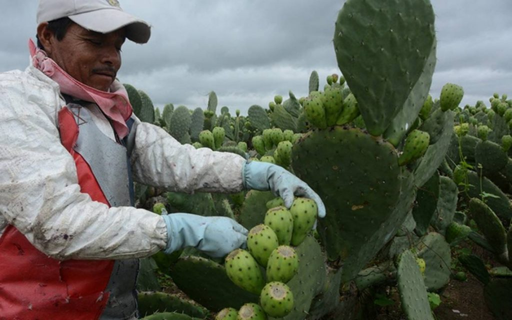 The farmers of Llaca Llaca inherited the task of planting from their parents.