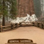 The millenary sequoias threatened by fire