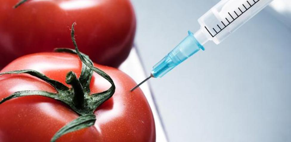 Tomatoes modified to treat hypertension are a breakthrough in their cultivation.