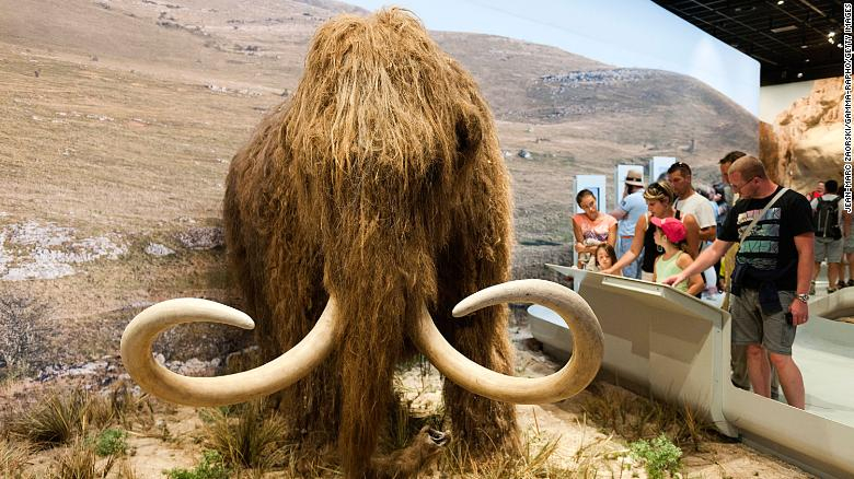 The project to resurrect the woolly mammoth